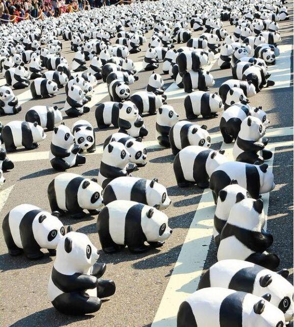台北市政府广场熊猫展美陈广场陈列设计图